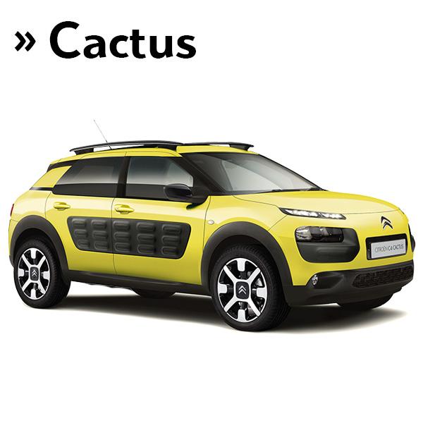 Nuevo C4 Cactus